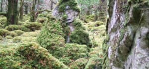 Killarney Woods